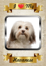 Havanese Dog Flexible Magnet I Love My 4x6 inch