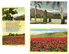 CA - ORANGE GROVES AND FIELDS OF POINSETTIAS - 3 Vintage Views 1930-1944