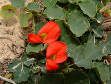 Ground Covers& Climbers Collection 12 seeds per species