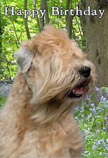 Soft Coated Wheaten Terrier Dog Design A6 Textured Birthday Card BDWHEATEN-3