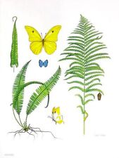 """Ferns & Butterflies,"" Watercolor Painting by Dianne Coleman, Ltd. Edition Print"