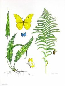 """Ferns & Butterflies,"" Watercolor by Dianne Coleman, Ltd. Ed. Print, 19"" x 25"""