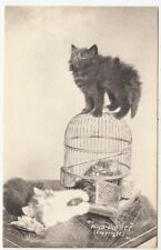 CATS & BIRDCAGE - Who Did It ? - c1900s era postcard by M & A Austin / St Albans