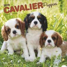 Cavalier King Charles Spaniel Puppies Wall Calendar 2019 Animals Pets