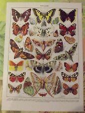 Ancienne Gravure Larousse 1950 Papillons d'Europe Machaon Thaïs Apollon Mars