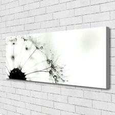Leinwand-Bilder Wandbild Canvas Kunstdruck 125x50 Pusteblume Pflanzen