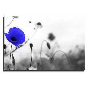 Poppy Landscape Floral Single Canvas Wall Art Picture Print 5