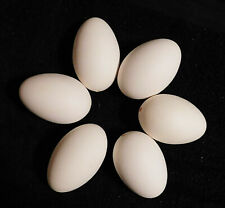 6 Blown Goose Eggs with Single Hole New