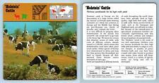 'Holstein' Cattle - Mammals - 1970's Rencontre Safari Wildlife Card