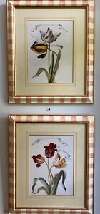 """Antique French Tulip Prints Prof Framed by """"The Old Smithy, England"""" Early 1900s"""