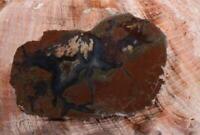 Polished Priday Plume Agate Thunderegg lapidary rough 1.2 oz slab