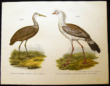1864 ORIGINAL LITHO CRISTATA LIMPKIN & RED LEGGED SERIEMA  FITZINGER ORNITHOLOGY