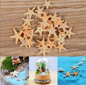 20pcs Mini Cute Small Starfish Sea Star Shell Beach Home Decoration DIY Craft