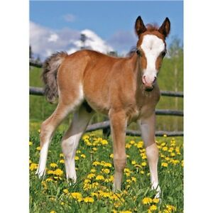 Cute Foal Card by Quayside Cards Blank suitable for any occasion