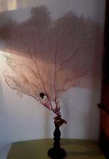 Cabinet de Curiosités grande Gorgone violette sur socle Oddities