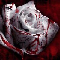 USA Seller-100PCS White Blood Rose Plant Flower Seeds Flower Garden Asaka Rare