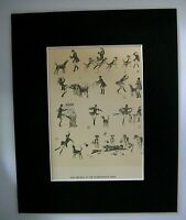 Dog Print Cecil Aldin Showing Hounds Peterborough Show 1928 Bookplate 8x10 w/Mat