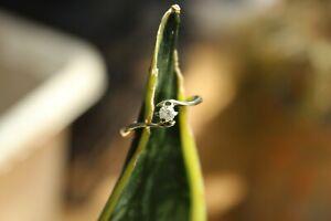 9ct white gold claw set round brilliant diamond twist solitaire ring 1.7g size N