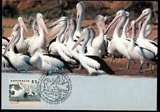Birds Pelicans  Australia Maximum Card 1994 First Day of Issue Postmark
