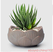 garden pots planters ceramic succulents lotus mini ceramic flower pots