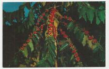 Postcard, Kona Coffee Is Famous The World Over, Kona Coast, Hawaii