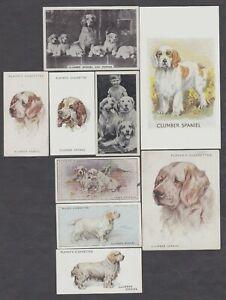 9 Different Vintage CLUMBER SPANIEL Tobacco/Cig/Tea Dog Cards