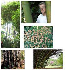 Bambus-Samen-Spar-Set, 5 tolle Sorten - NUR FÜR KURZE ZEIT !