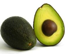 Super Hass Avocado - 7 gallon pot Grafted