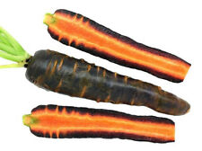 390mg Cosmic Purple Carrot Seeds ~400 ct Garden Vegetable Antioxidant Rich! USA