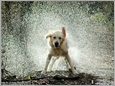 Pack of 4 Puppy Dog Rain Dogs Golden Retriever Greeting Notecards / Envelopes