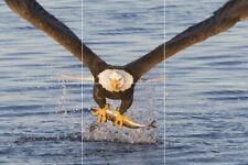 Eagle fishing bird wildlife fish nature ceramic tile mural backsplash 12x18