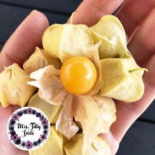 Tomatillo PINEAPPLE 10 Samen Physalis ANANAS alte gute Sorte ertragreich lecker