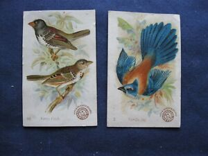 Victorian Trade Card Arm& Hammer Florida Jay #2 Harris Finch #48  Birds 80