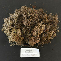 Brown Lichen ~ Serious-Play Scenery Foliage Warhammer Model Tree Moss Forest