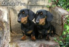 Dachshund Thank You Card By Starprint - No 2