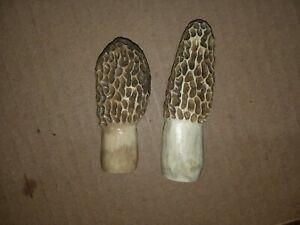 2 morel mushroom decoy carvings;antlers sheds:Larry Kindell:molly moochers;bones