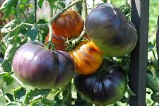 15 Graines/Seeds Tomate Bleue Ancienne - Variété : Ananas Bleue - Rare - BIO