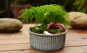 Kasamodern Wilder Concrete Planter Succulent Flower Pot and Plant Container