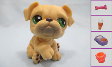 Littlest Pet Shop Dog Bulldog 107 and Free Accessory Authentic Lps