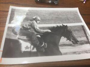 1973 Vintage Horse Racing Track Photo LA PREVOYANTE Morning Workout