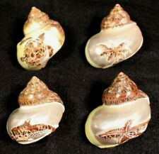 "seashells, carved designs for hermit crabs 1 1/8 - 1 1/4"" opening (set of 4)"