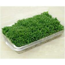 Hot Selling 100% Natural Forest Carpet Moss For Terrarium Decoration