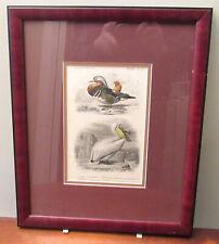 ornithology print pelican canard Fournier Travies Dessalines French Museum Natrl