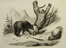 UNBEKANNT (19.Jhd), Europäischer Bär im Gebirge mit Jäger, Lith.