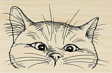 Nosy Cat, Wood Mounted Rubber Stamp STAMPENDOUS, NEW - P282