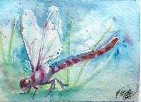 ACEO Original Dragonfly Painting Watercolor Wildlife Art Listed By Artist USA