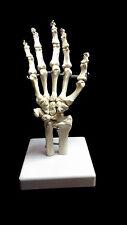 @Professional Full Size Human Hand Skeleton Model@High Quality@UK Seller@