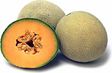 honey kiss melon  very juicy and super sweet, 50  seeds per pkt