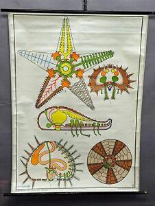Schulwandkarte Rollbild vintage Poster Seestern Seeigel maritime Dekoration