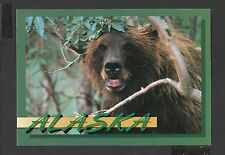 Colour Postcard Portrait  Grizzley Bear Smiles for the camera Alaska unposted